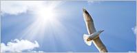 Kim Pentecost - Wisdom Dance-Soaring